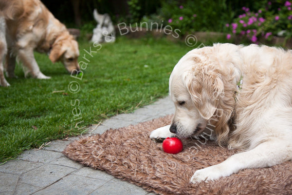 Planet Dog Orbee Tuff Nook Review, Tough Dog Toys | Barks & Bunnies UK