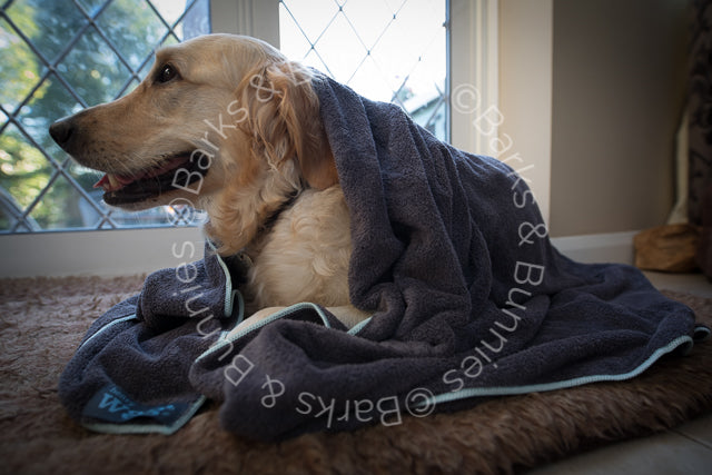 Henry Wag Microfibre Dog Towel Review | Barks & Bunnies