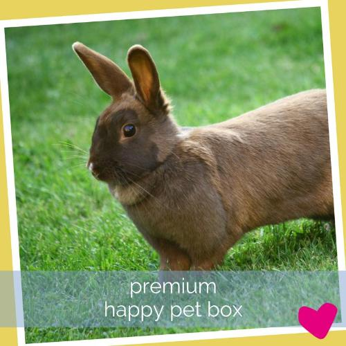 Happy Rabbit Subscription Box UK, Premium | Barks & Bunnies