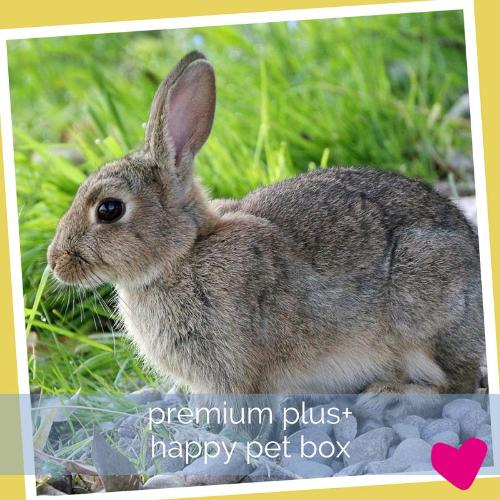 Happy Rabbit Subscription Box Premium PLUS Bunny Box | Barks & Bunnies