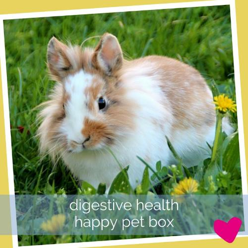 Happy Rabbit Box - Digestive Health