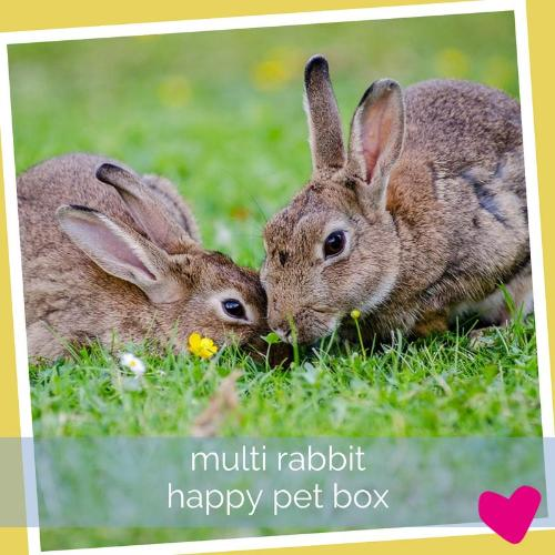 Happy Rabbit Box - Multi