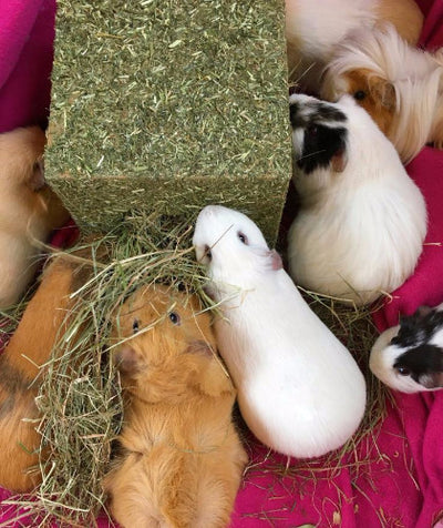 Rosewood I Love Hay Cube for Rabbits & Small Animals | Barks & Bunnies