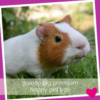 Happy Guinea Pig Subscription Box UK & USA delivery | Barks & Bunnes