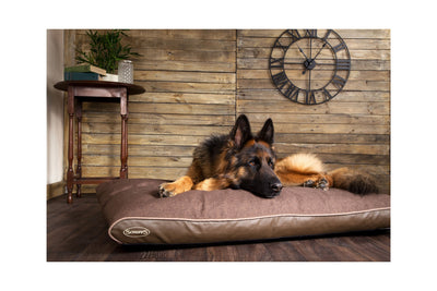 Scruffs Hilton Memory Foam Dog Bed | Barks & Bunnies