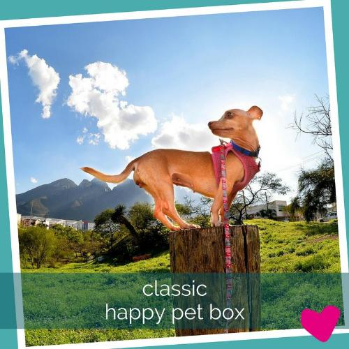 Happy Pet Subscription Box UK, Classic Dog | Barks & Bunnies