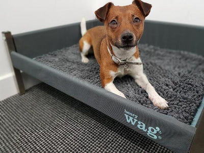 Henry Wag Microfibre Noodle Pet Mat for Dogs & Pets | Barks & Bunnies