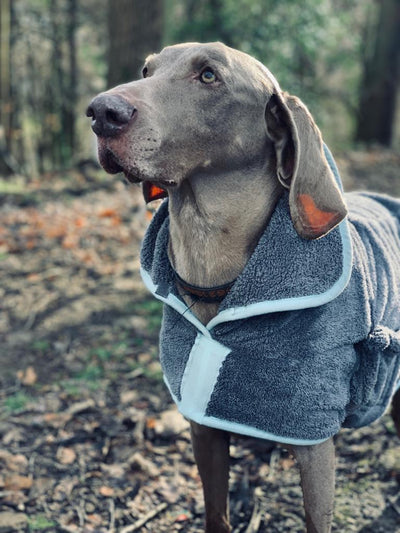 Henry Wag Microfibre Dog Drying Coat | Barks & Bunnies