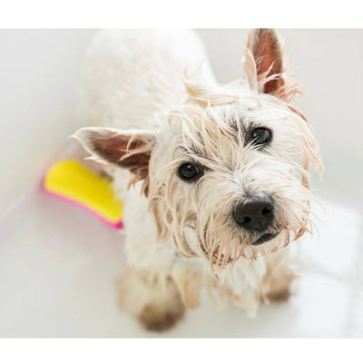 Pet Teezer Detangling & Grooming Brush for Dogs | Barks & Bunnies
