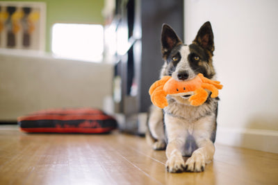 P.L.A.Y. King Crab Dog Toy Under The Sea, Eco-Friendly | Barks & Bunnies