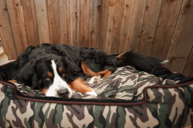 PLAY Camouflage Lounge Bed, Designer Dog Beds UK | Barks & Bunnies
