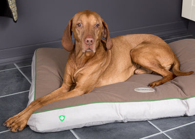 Scruffs Insect Shield Mattress Dog Bed | Barks & Bunnies