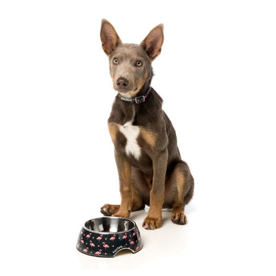 FuzzYard Fabmingo Easy Feeder Pet Bowl for Dogs | Barks & Bunnies