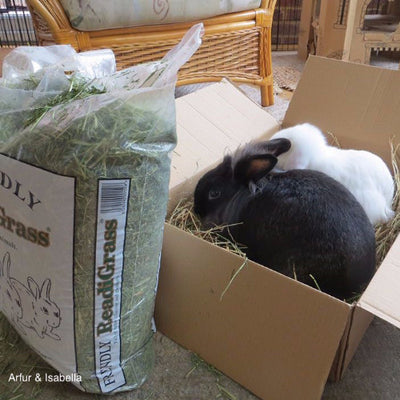 Friendship Estates Friendly Readigrass for Rabbits | Barks & Bunnies
