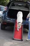 Henry Wag Folding Dog Ramp for Car Boots | Barks & Bunnies