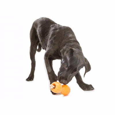 Zogoflex Qwizl, Interactive Extra tough Dog Toy UK | Barks & Bunnies