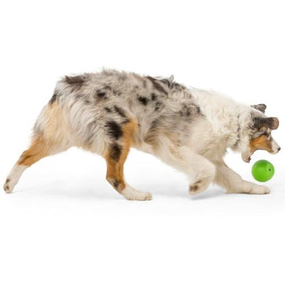 Zogoflex Echo Rando by West Paw Design, Tough Dog Toy | Barks & Bunnies