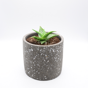 speckled concrete pot (granite-look pot) and aloe freckles