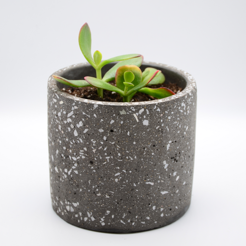 speckled concrete pot (granite-look pot) and succulent golden jade