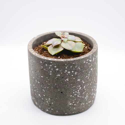 speckled concrete pot (granite-look pot) and succulent perle von Nurnberg