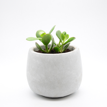 Load image into Gallery viewer, small cement fishbowl vase pot with succulent baby jade
