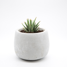 Load image into Gallery viewer, small cement fishbowl vase pot with succulent zebra plant