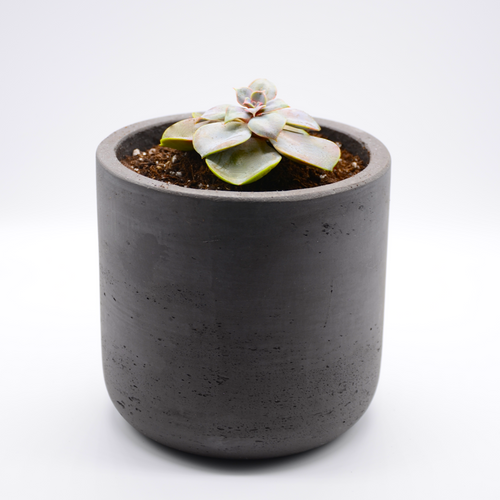 black fiberglass combined with cement pot and succulent perle von nurnberg