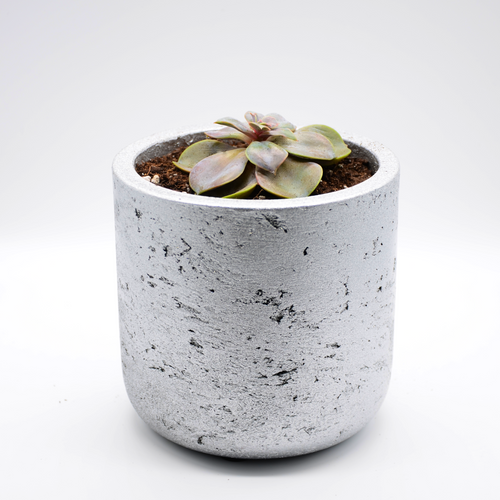 silver metallic fiberglass combined with cement pot and succulent perle von nurnberg