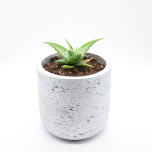 silver metallic fiberglass combined with cement pot and aloe freckles