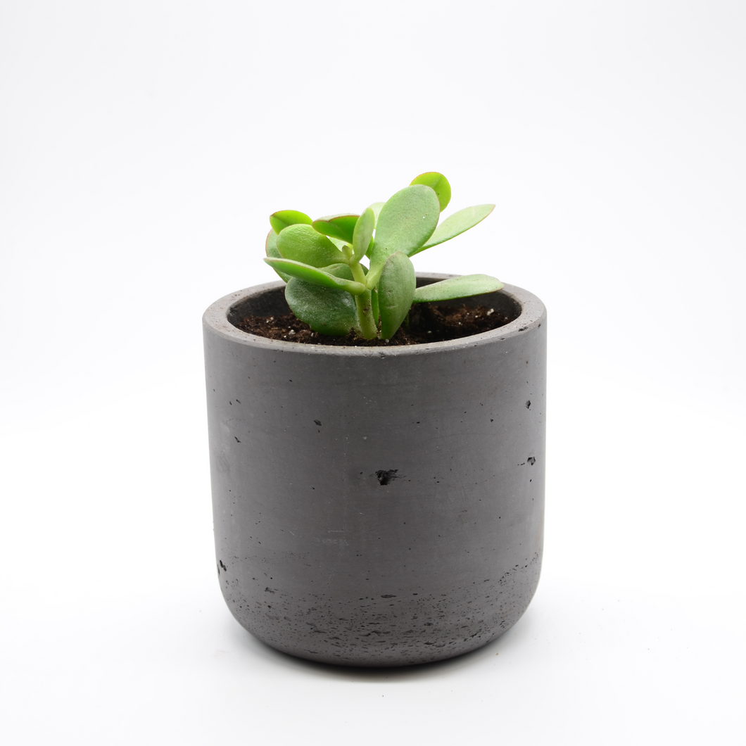 black fiberglass combined with cement pot and succulent baby jade