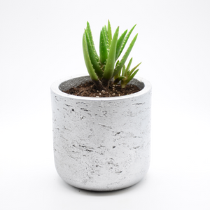 silver metallic fiberglass combined with cement pot and aloe vera