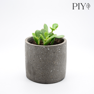 speckled concrete pot (granite-look pot) and succulent baby jade