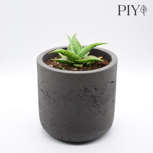 black fiberglass combined with cement and aloe aristata