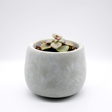 Load image into Gallery viewer, small cement fishbowl vase pot with succulent perle von Nurnberg