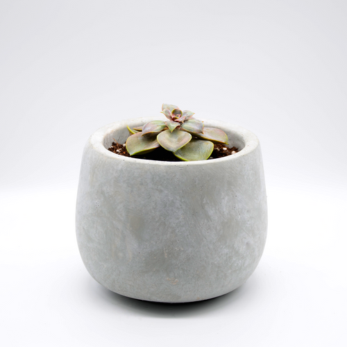 small cement fishbowl vase pot with succulent perle von Nurnberg