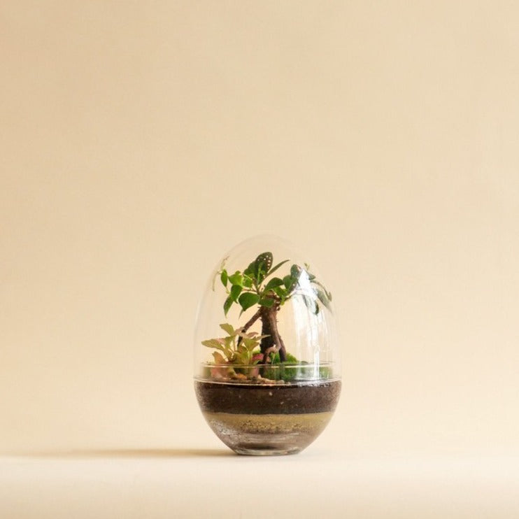 Niwa Oasis Terrarium - Click & Collect Only