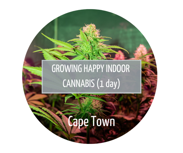 Growing Happy Indoor Cannabis - Cape Town