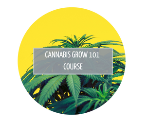 Cannabis Grow 101 Course - Launches February 1st