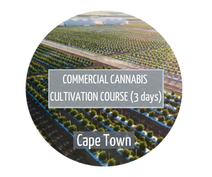 Commercial Cannabis Cultivation Cape Town