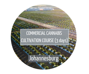 Commercial Cannabis Cultivation Johannesburg