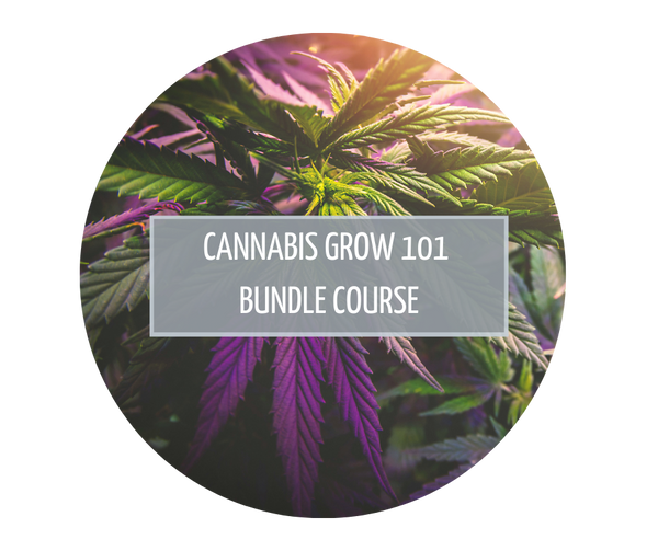 Cannabis Grow 101 Bundle Course