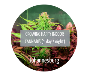 Growing Happy Indoor Cannabis - Johannesburg