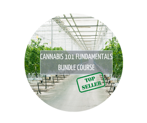 Cannabis 101 Fundamentals Bundle Course