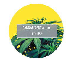 Cannabis Grow 101 cannabis education