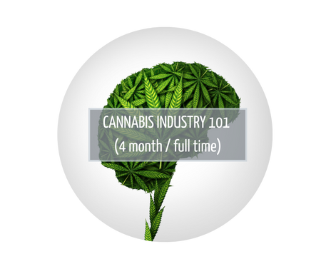 Cannabis Industry 101