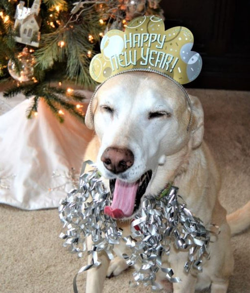 Include your dog in your New Year's resolution
