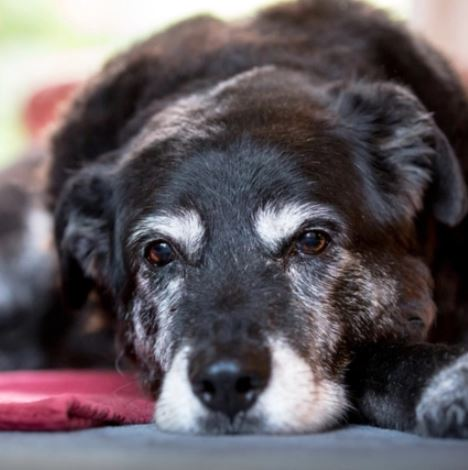 Dealing with a Senior Dog's Bladder problems