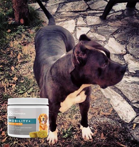 The Growth of Dog Supplements