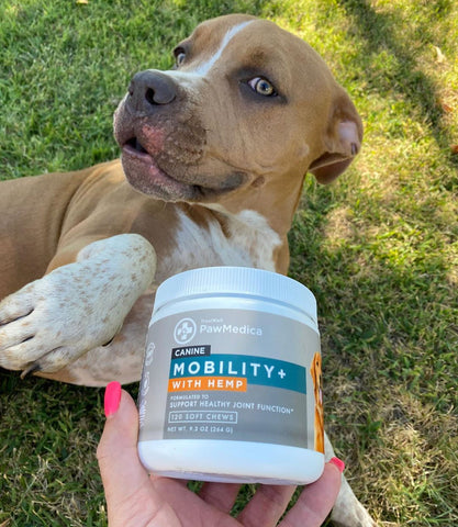 Glucosamine hip and joint supplements for dogs