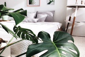 Planty of friends – Trend Green Interior 🌿